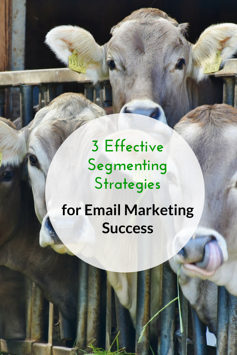 3 Effective Segmenting Strategies for Email Marketing Success